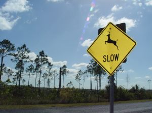 757947_deer_crossing_2.jpg